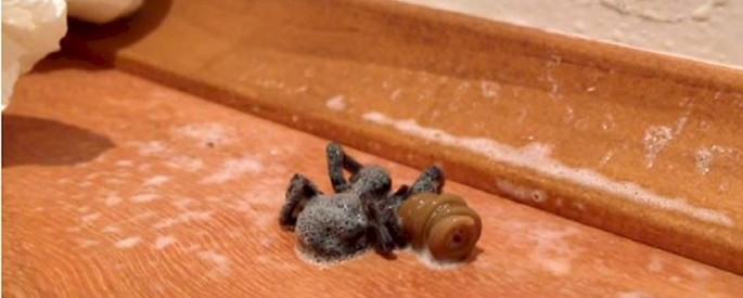 spiderworm